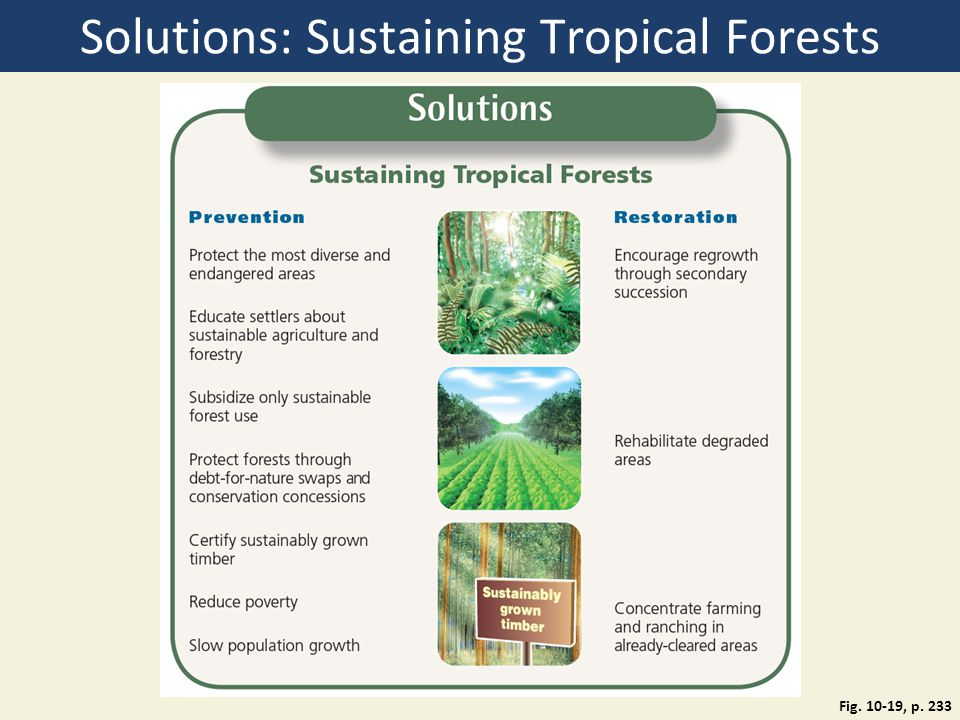 Solutions: Sustaining Tropical Forests