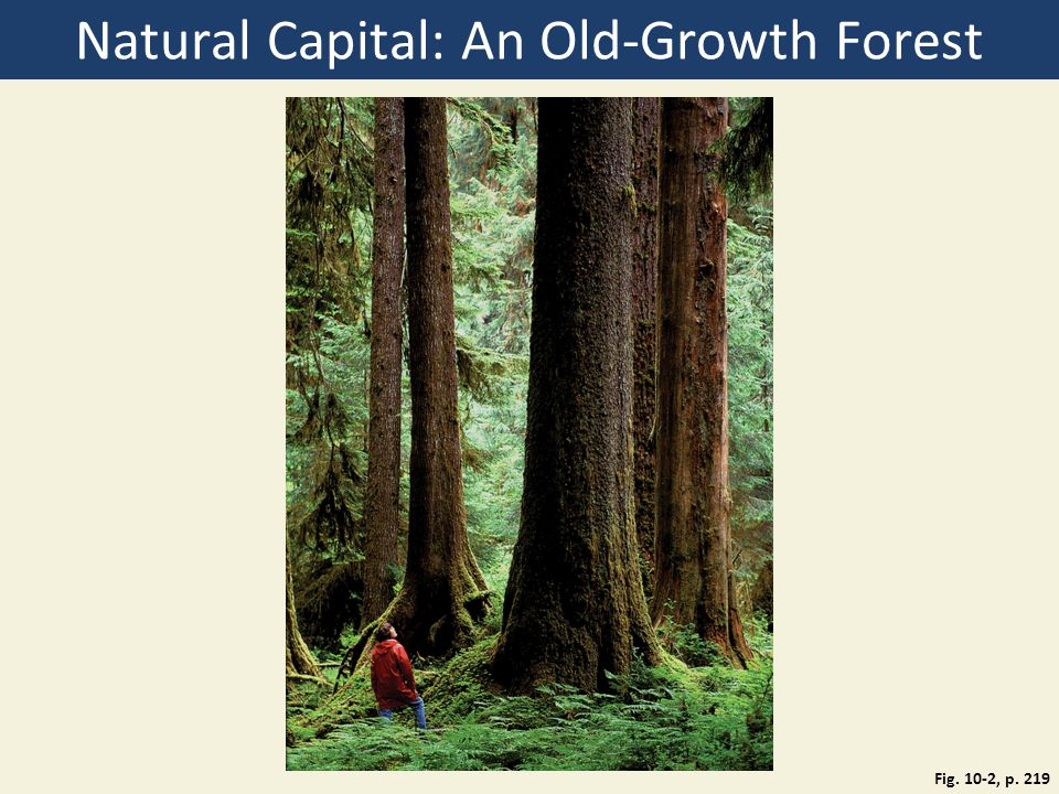 Natural Capital: An Old-Growth Forest