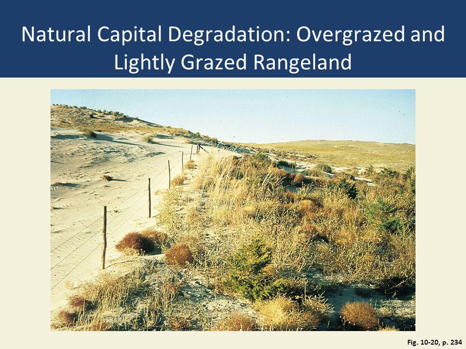 Natural Capital Degradation: Overgrazed and Lightly Grazed Rangeland