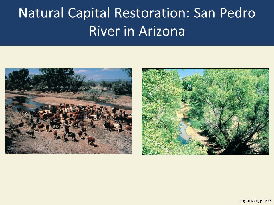 Natural Capital Restoration: San Pedro River in Arizona