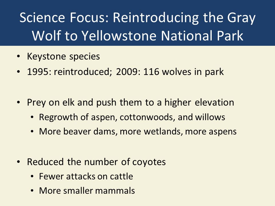 Science Focus: Reintroducing the Gray Wolf to Yellowstone National Park