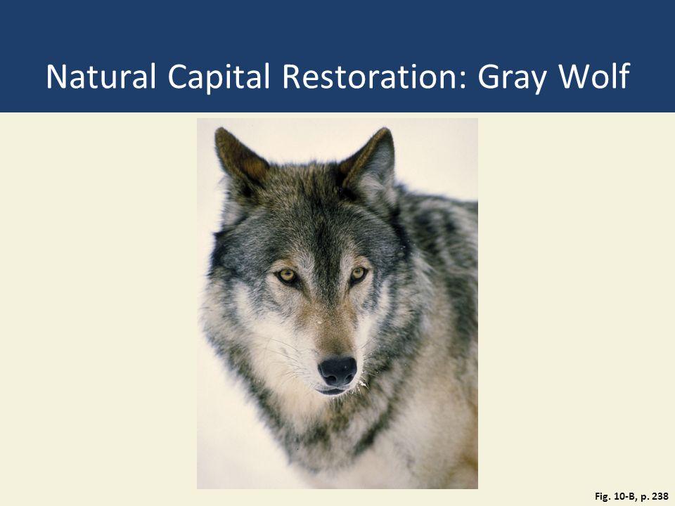 Natural Capital Restoration: Gray Wolf