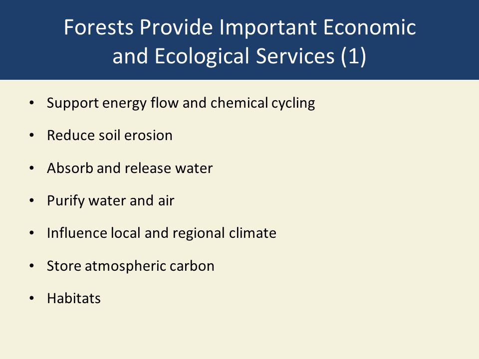 Forests Provide Important Economic and Ecological Services (1)