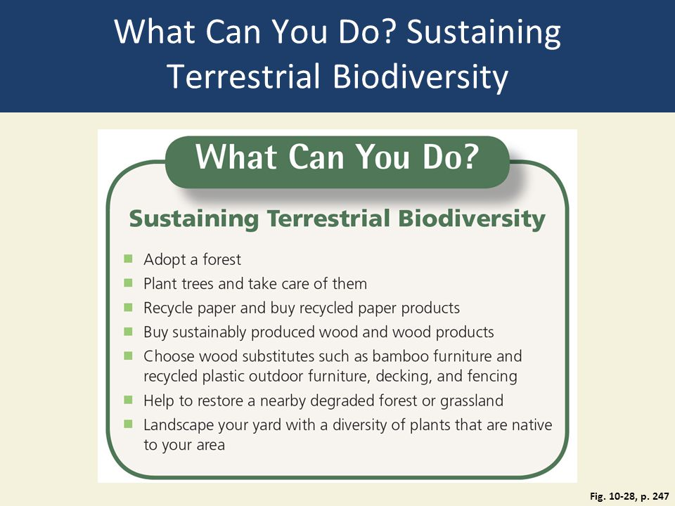 What Can You Do Sustaining Terrestrial Biodiversity