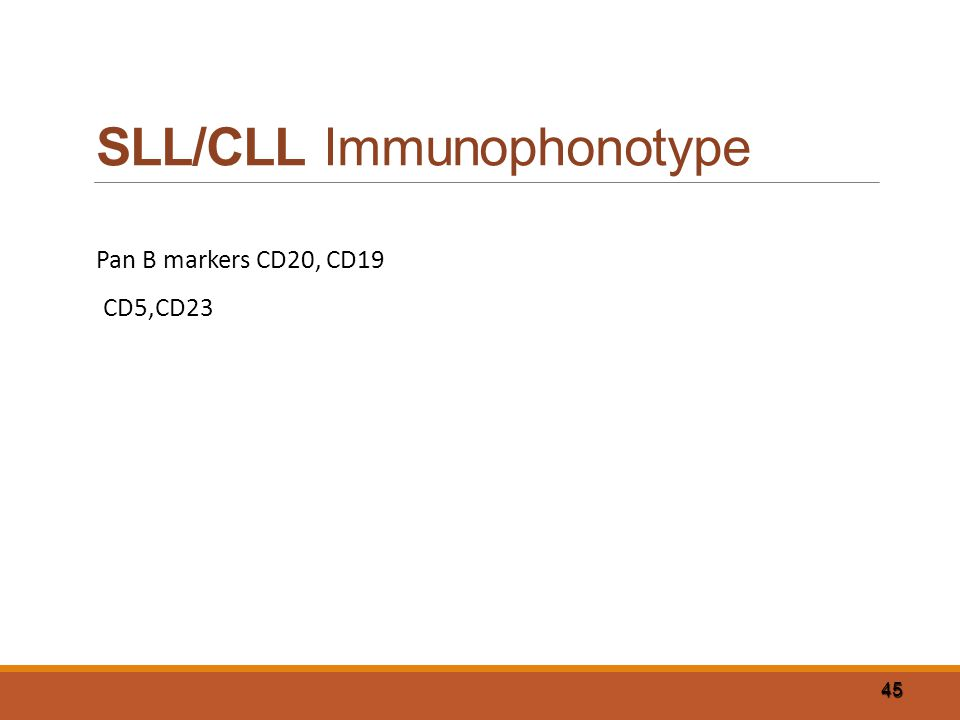 SLL/CLL Immunophonotype