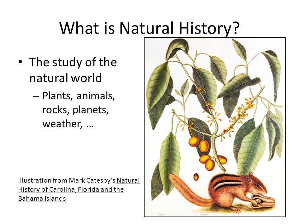 What is Natural History