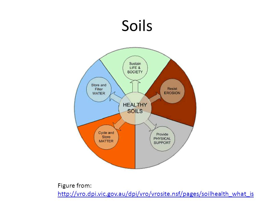 Soils Healthy soils store air and water, resist erosion, and store organic matter in addition to supporting plants and animals.