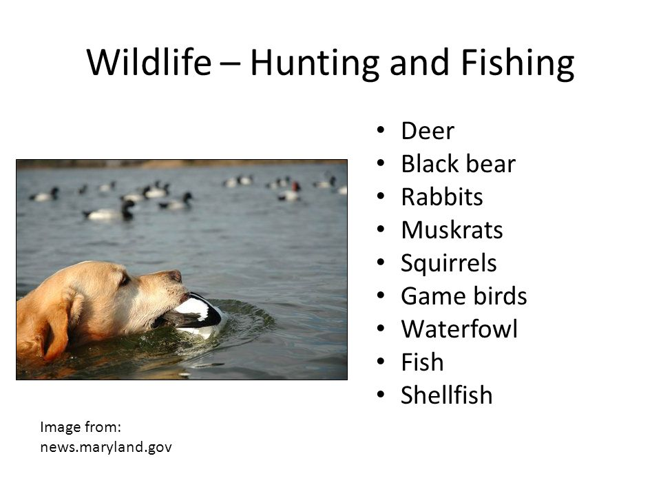 Wildlife – Hunting and Fishing
