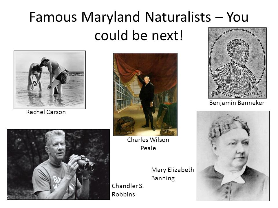 Famous Maryland Naturalists – You could be next!