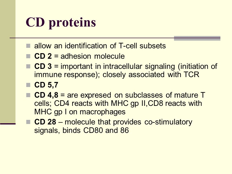 CD proteins allow an identification of T-cell subsets