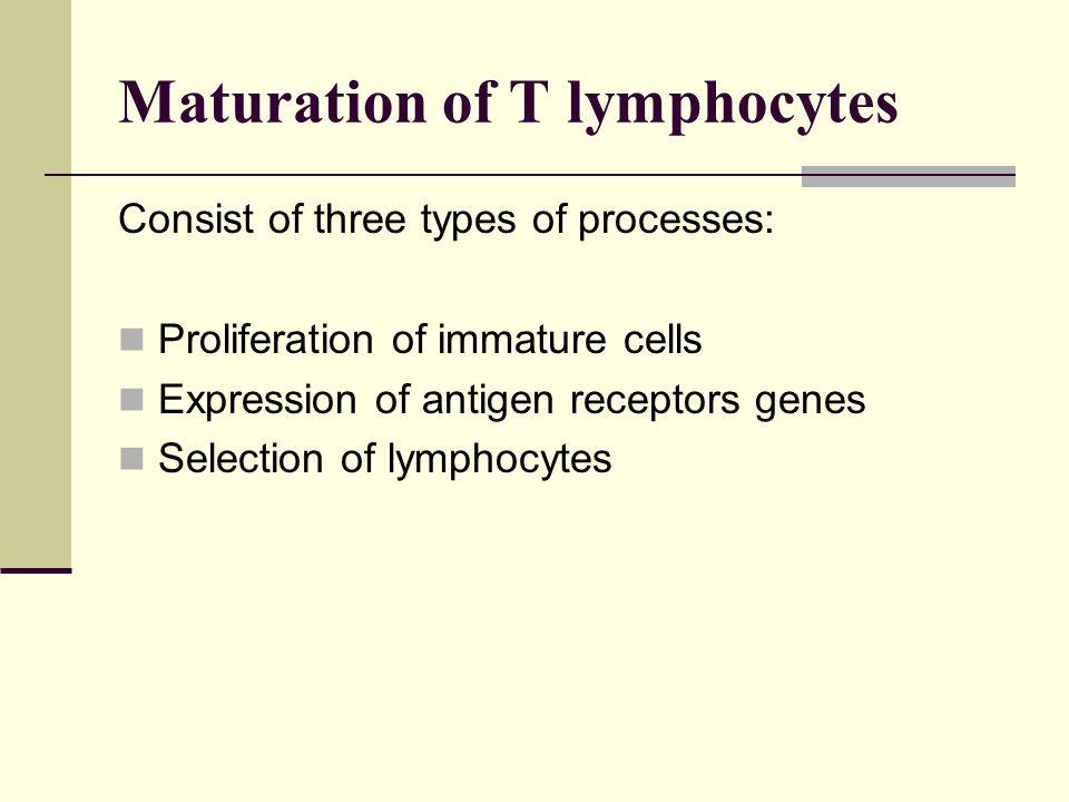 Maturation of T lymphocytes