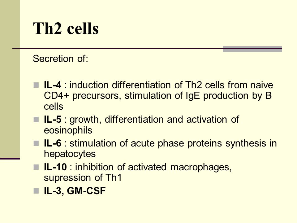 Th2 cells Secretion of: IL-4 : induction differentiation of Th2 cells from naive CD4+ precursors, stimulation of IgE production by B cells.