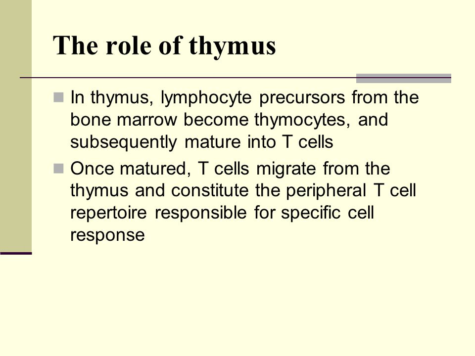 The role of thymus In thymus, lymphocyte precursors from the bone marrow become thymocytes, and subsequently mature into T cells.