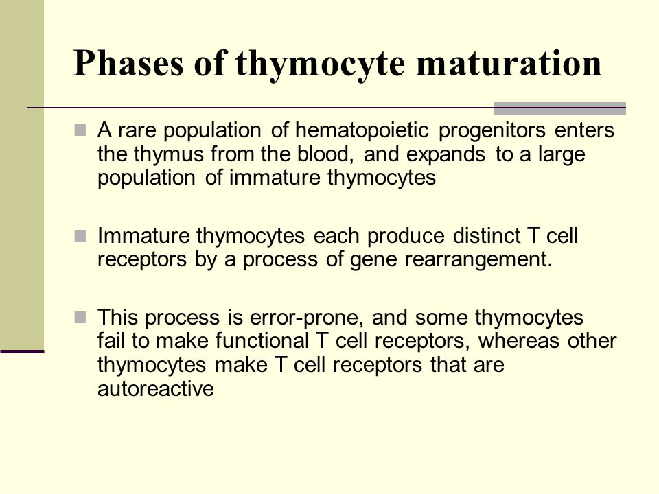 Phases of thymocyte maturation