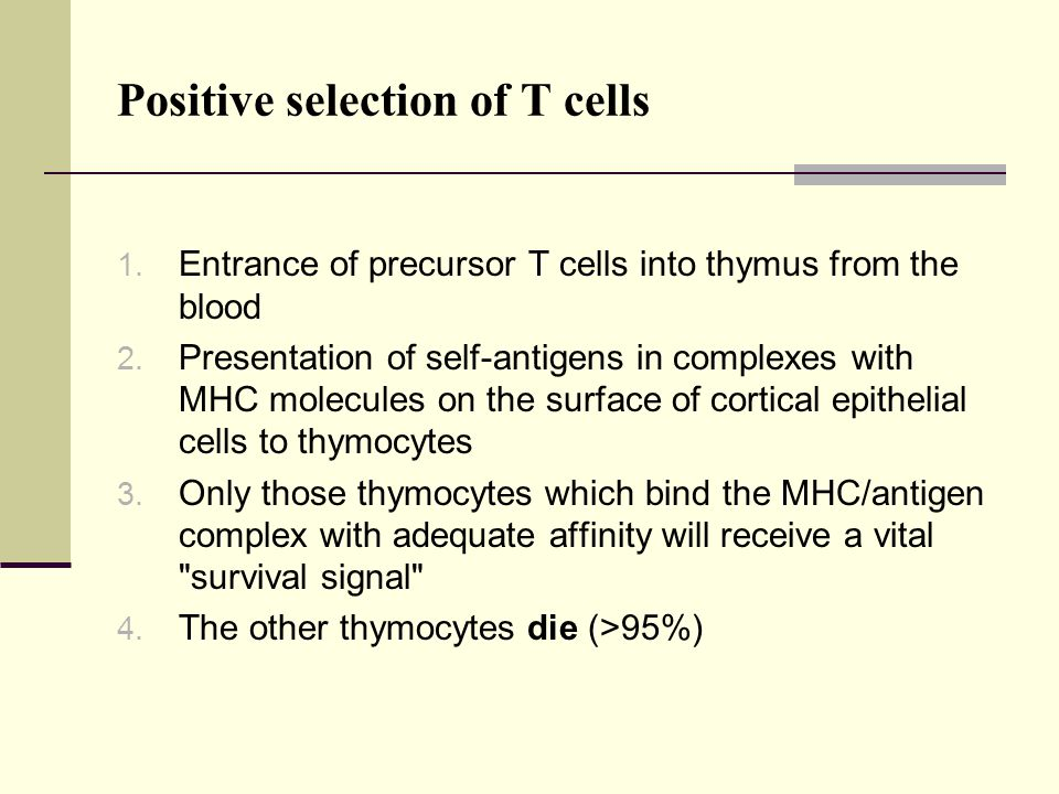 Positive selection of T cells