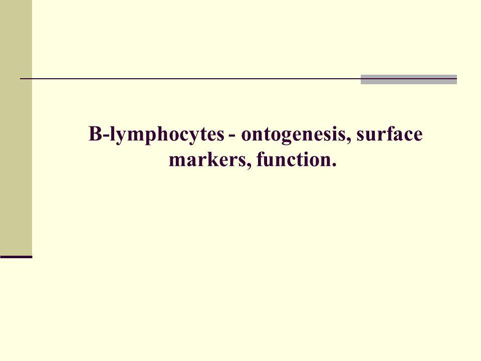 B-lymphocytes - ontogenesis, surface markers, function.