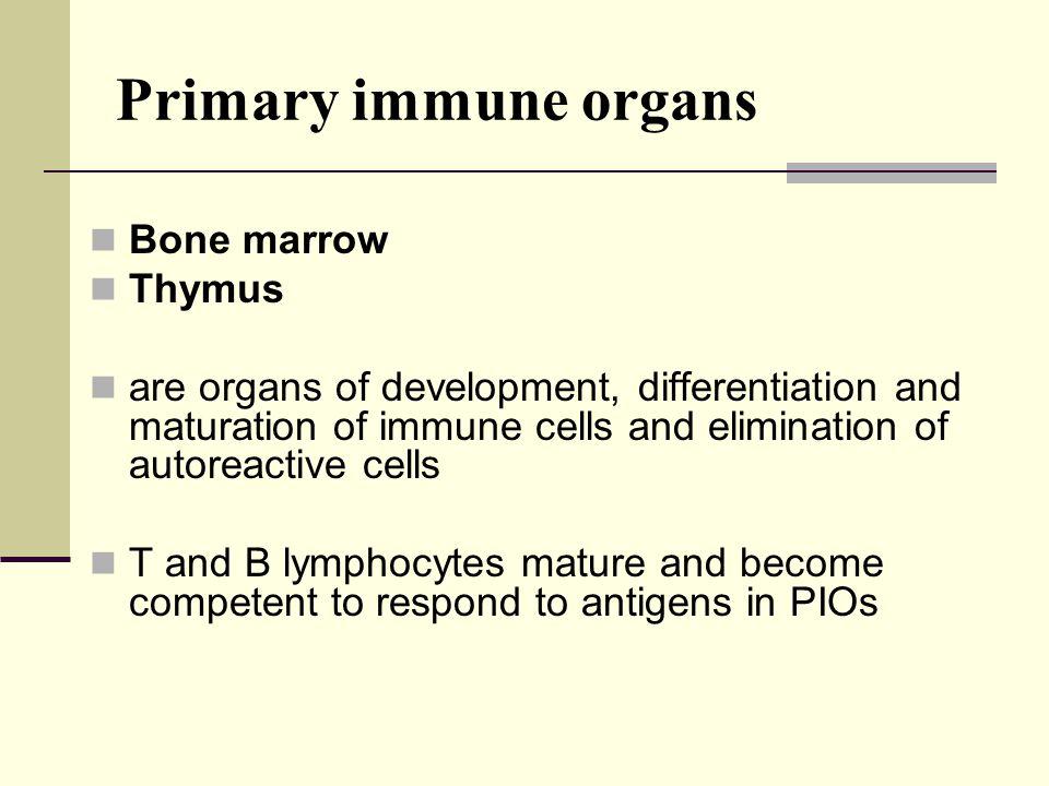Primary immune organs Bone marrow Thymus