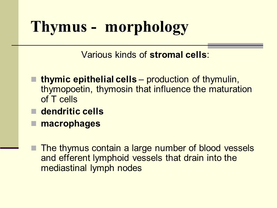 Various kinds of stromal cells: