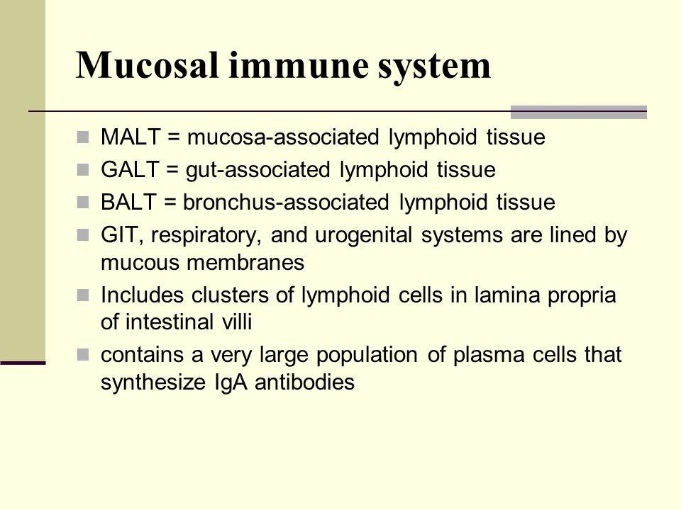 Mucosal immune system MALT = mucosa-associated lymphoid tissue