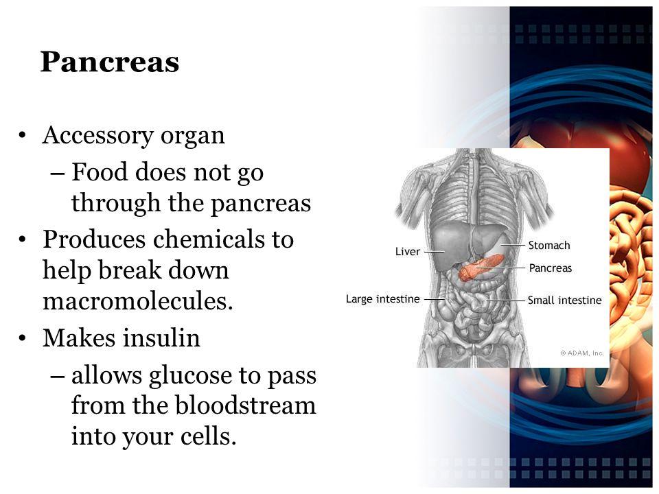 Pancreas Accessory organ Food does not go through the pancreas