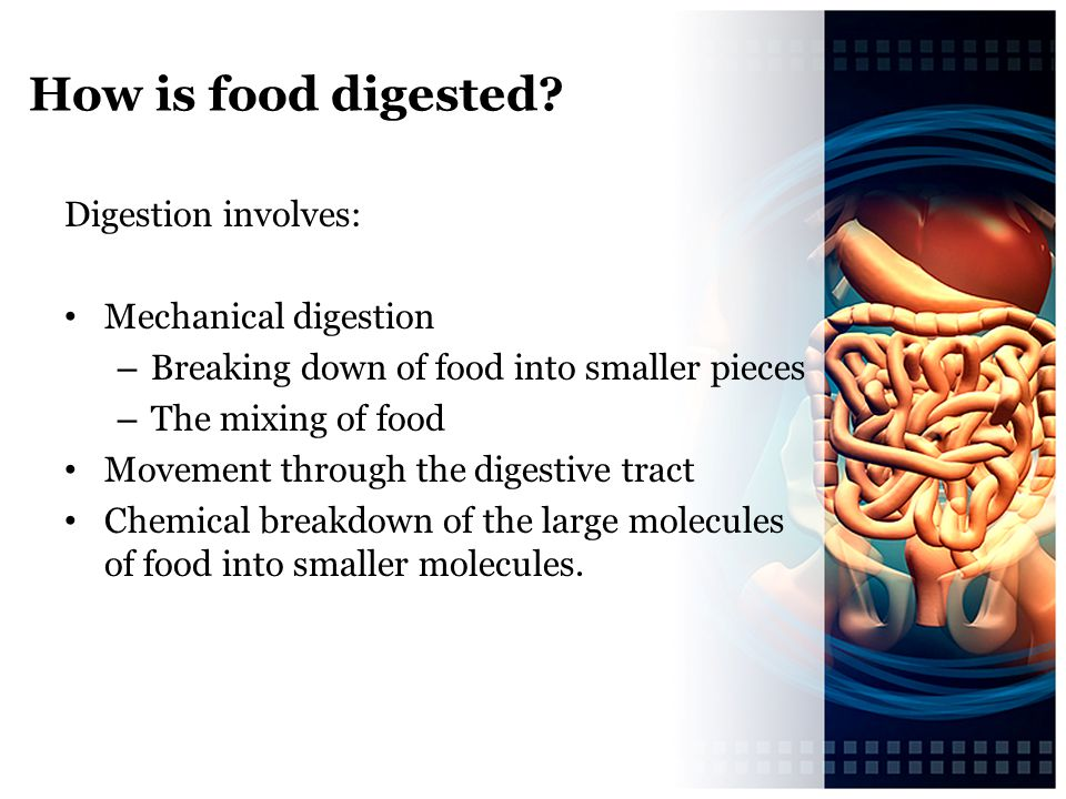 How is food digested Digestion involves: Mechanical digestion