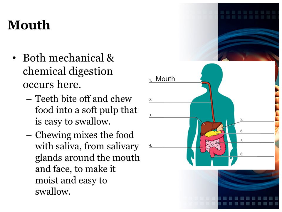 Mouth Both mechanical & chemical digestion occurs here.
