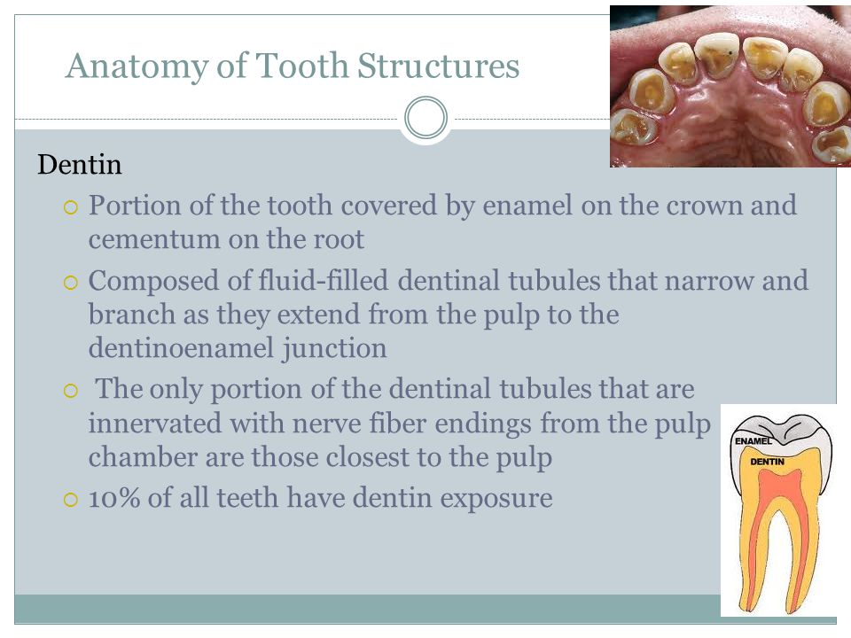 Anatomy of Tooth Structures