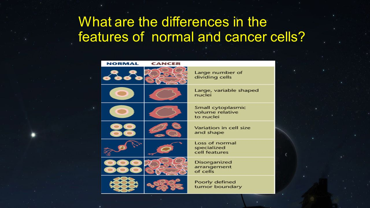 What are the differences in the features of normal and cancer cells