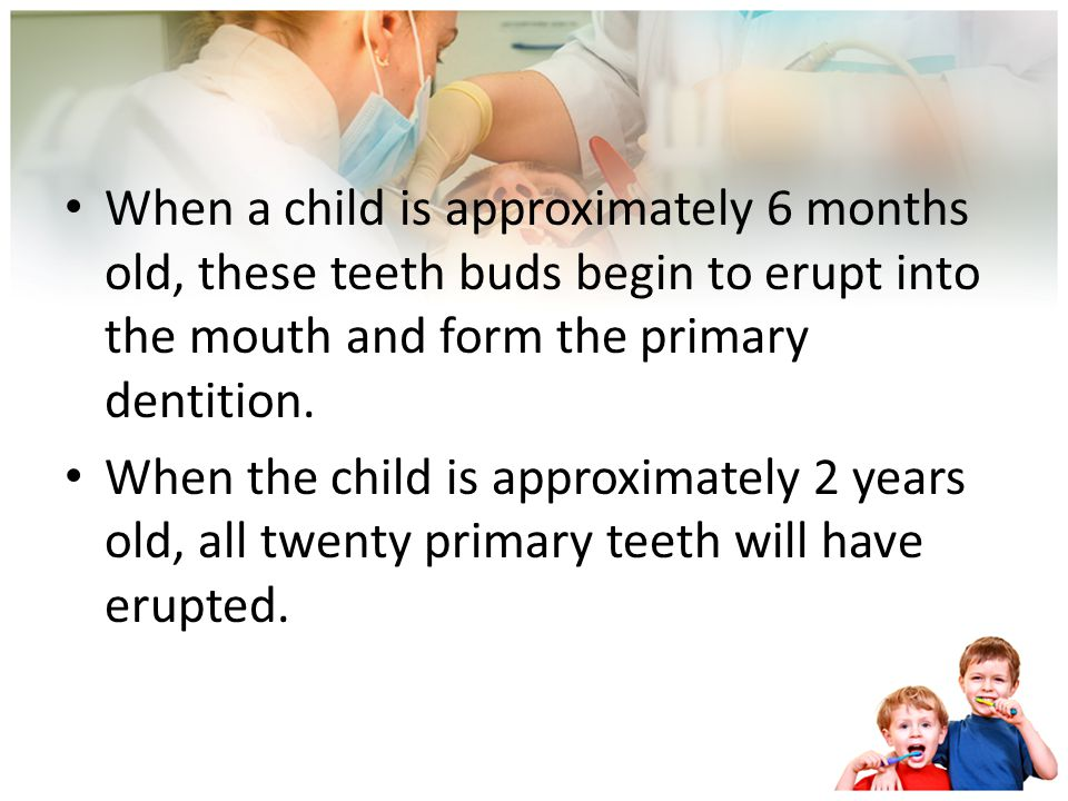 When a child is approximately 6 months old, these teeth buds begin to erupt into the mouth and form the primary dentition.