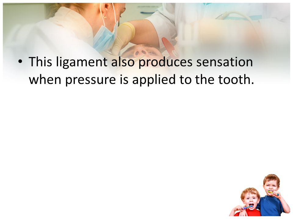This ligament also produces sensation when pressure is applied to the tooth.