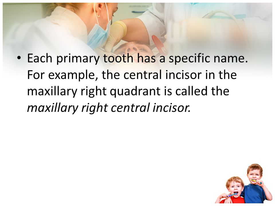 Each primary tooth has a specific name