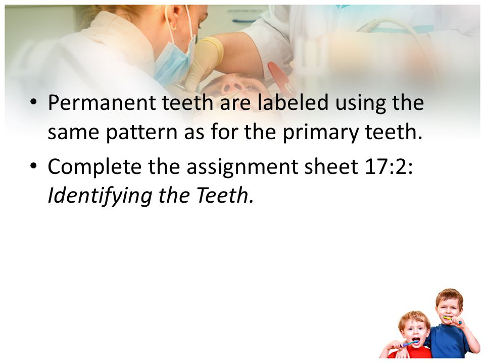 Permanent teeth are labeled using the same pattern as for the primary teeth.