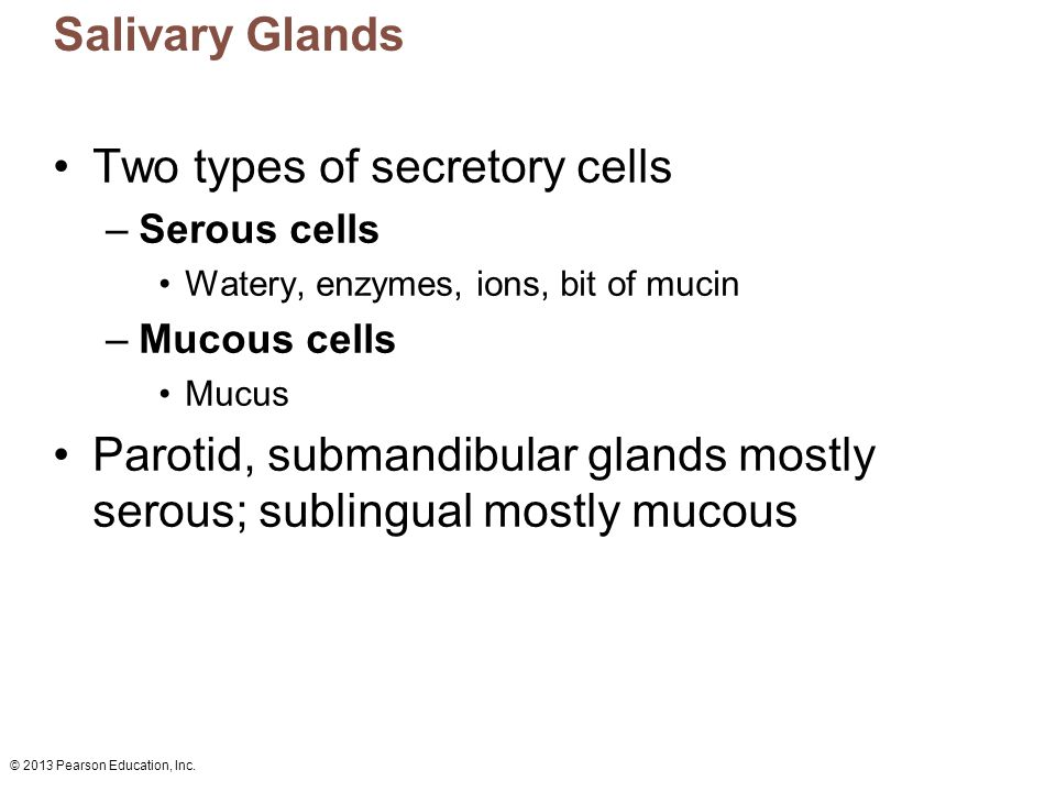 Two types of secretory cells
