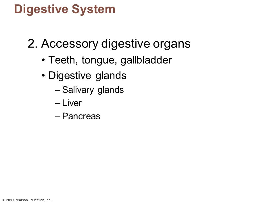 2. Accessory digestive organs