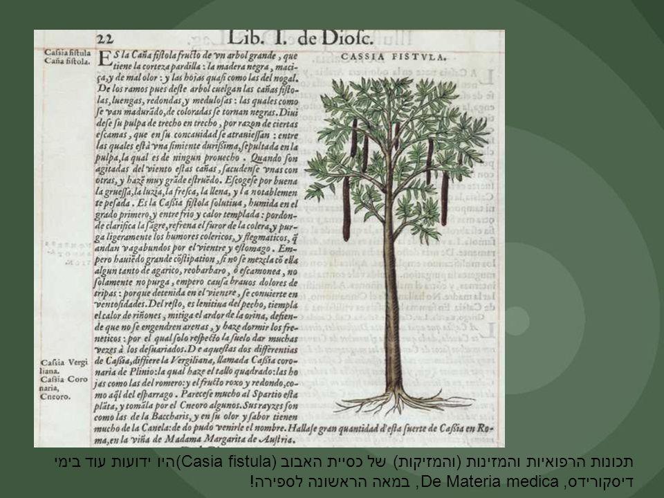 תכונות הרפואיות והמזינות (והמזיקות) של כסיית האבוב (Casia fistula)היו ידועות עוד בימי דיסקורידס, De Materia medica, במאה הראשונה לספירה!