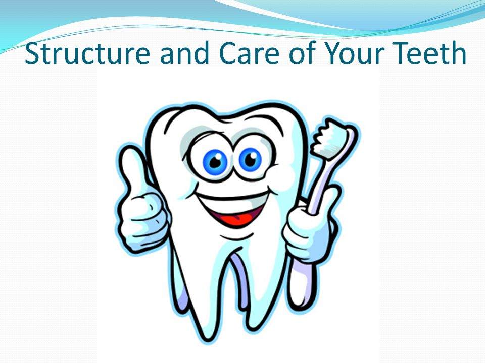 Structure and Care of Your Teeth