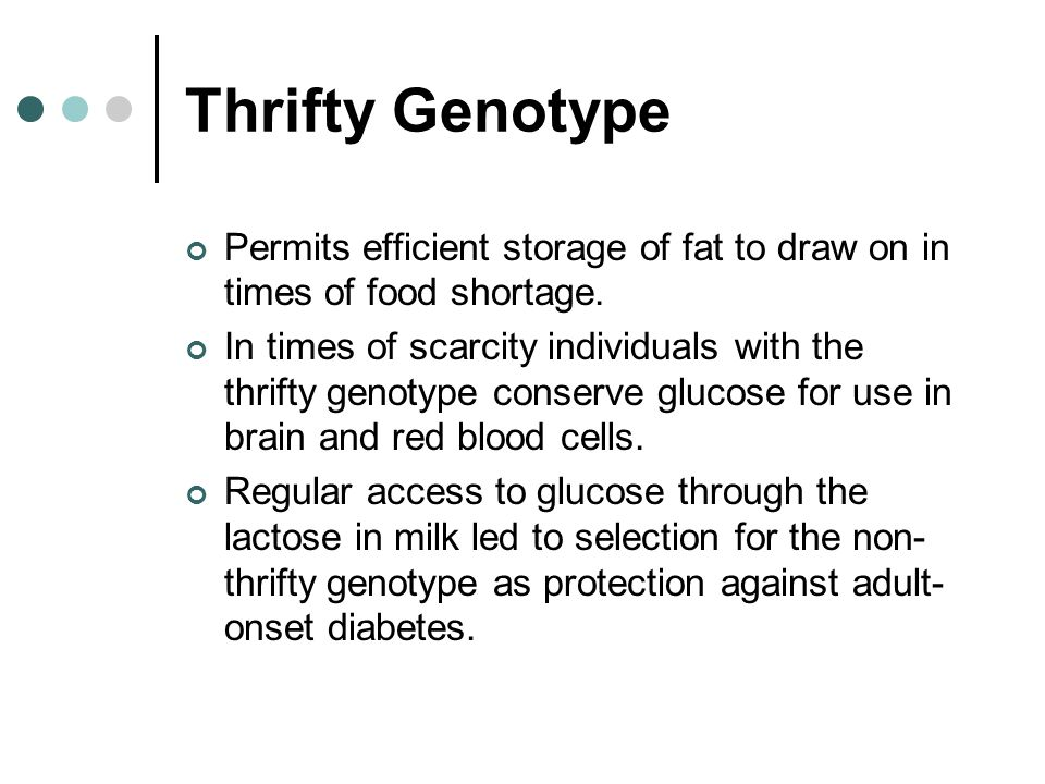 Thrifty Genotype Permits efficient storage of fat to draw on in times of food shortage.