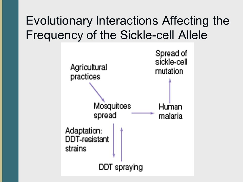 Evolutionary Interactions Affecting the Frequency of the Sickle-cell Allele