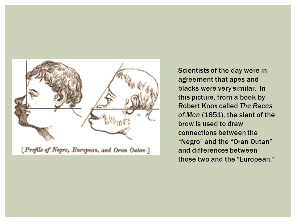 Scientists of the day were in agreement that apes and blacks were very similar. In this picture, from a book by Robert Knox called The Races of Men (1851), the slant of the brow is used to draw connections between the Negro and the Oran Outan and differences between those two and the European.