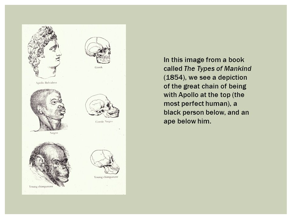 In this image from a book called The Types of Mankind (1854), we see a depiction of the great chain of being with Apollo at the top (the most perfect human), a black person below, and an ape below him.