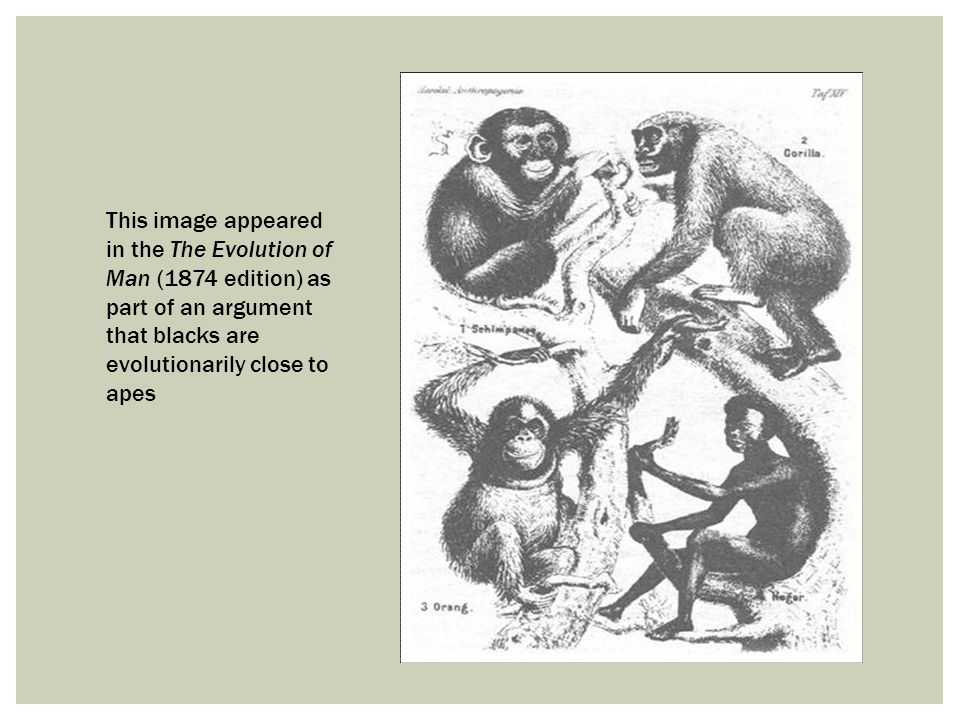 This image appeared in the The Evolution of Man (1874 edition) as part of an argument that blacks are evolutionarily close to apes