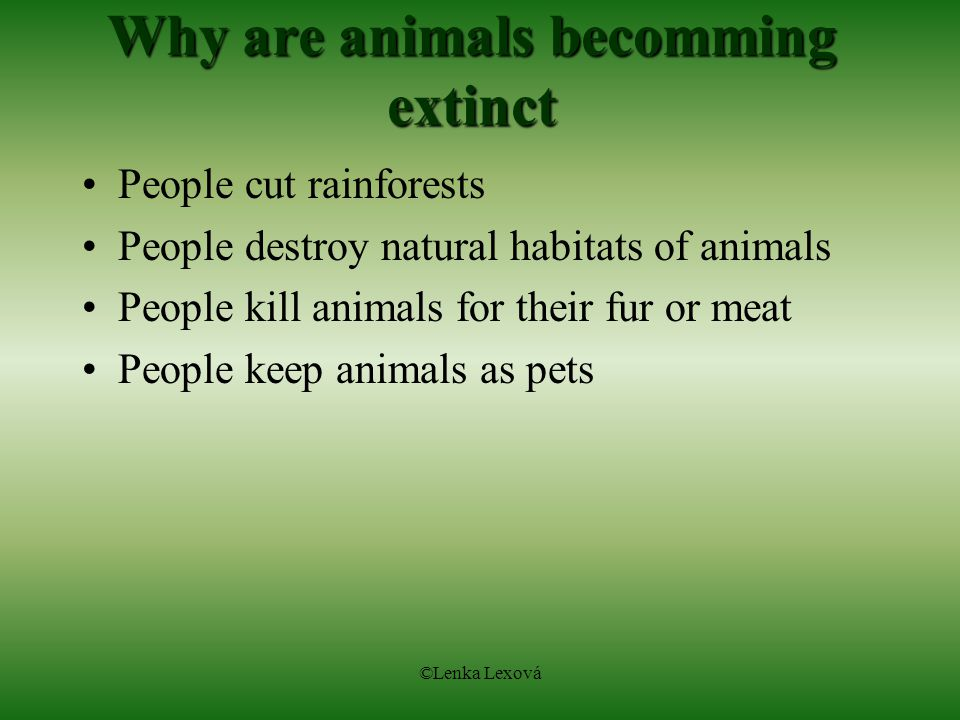 Why are animals becomming extinct