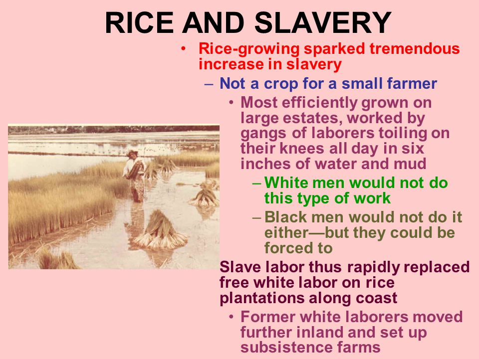 RICE AND SLAVERY Rice-growing sparked tremendous increase in slavery