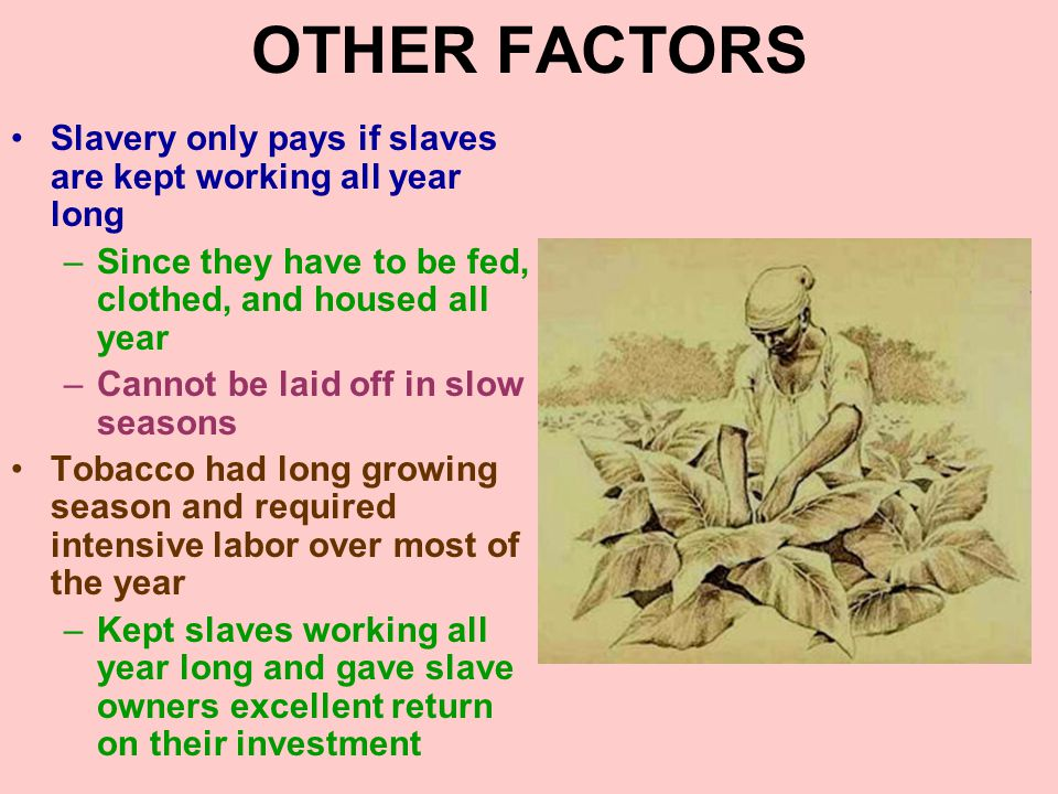 OTHER FACTORS Slavery only pays if slaves are kept working all year long. Since they have to be fed, clothed, and housed all year.