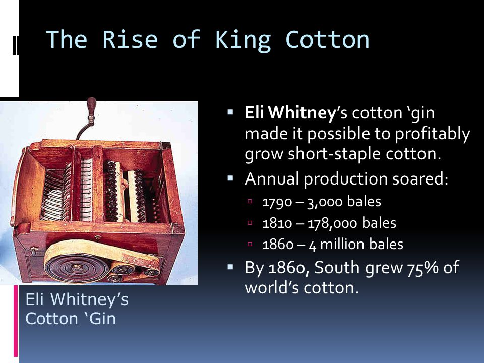 The Rise of King Cotton Eli Whitney's cotton 'gin made it possible to profitably grow short-staple cotton.