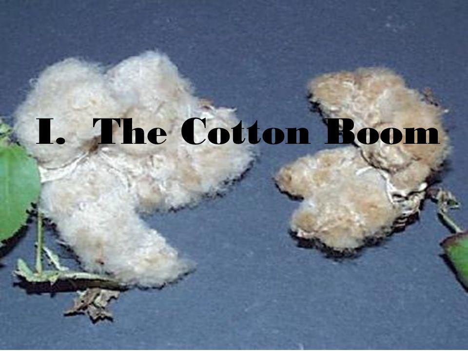 I. The Cotton Boom
