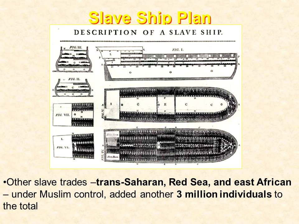 Slave Ship Plan Other slave trades –trans-Saharan, Red Sea, and east African – under Muslim control, added another 3 million individuals to the total.