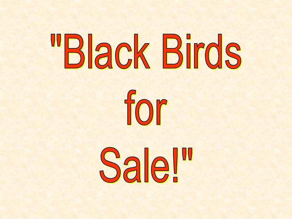 Black Birds for Sale!