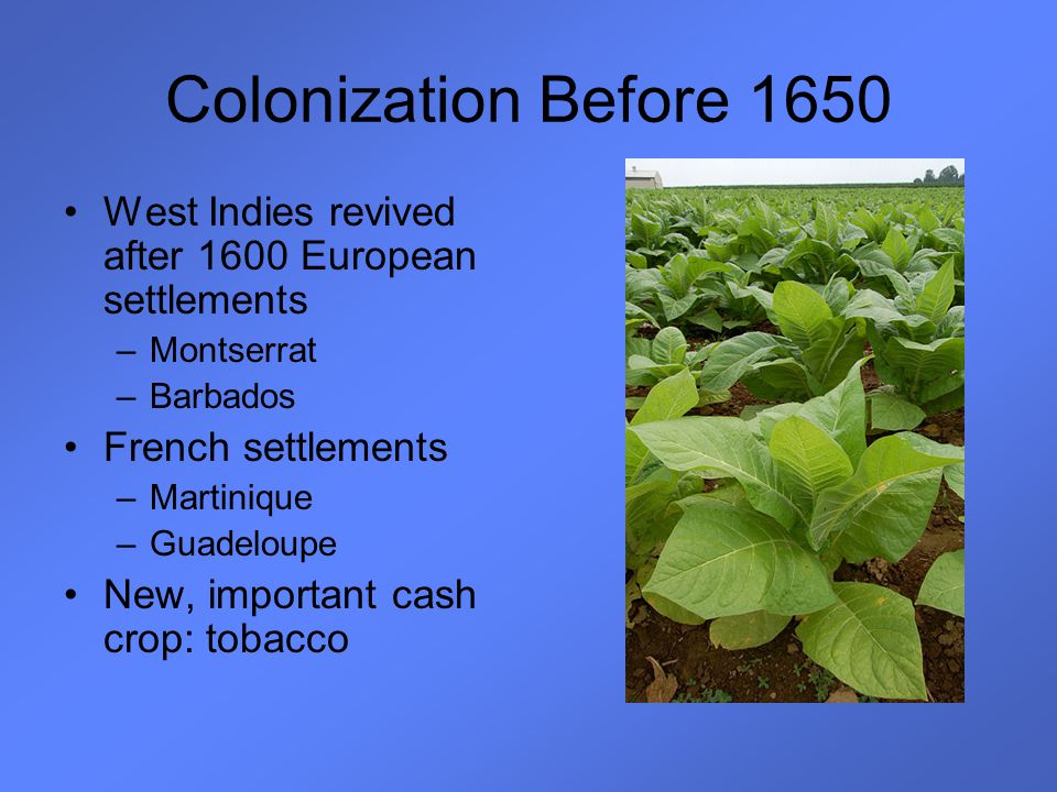 Colonization Before 1650 West Indies revived after 1600 European settlements. Montserrat. Barbados.