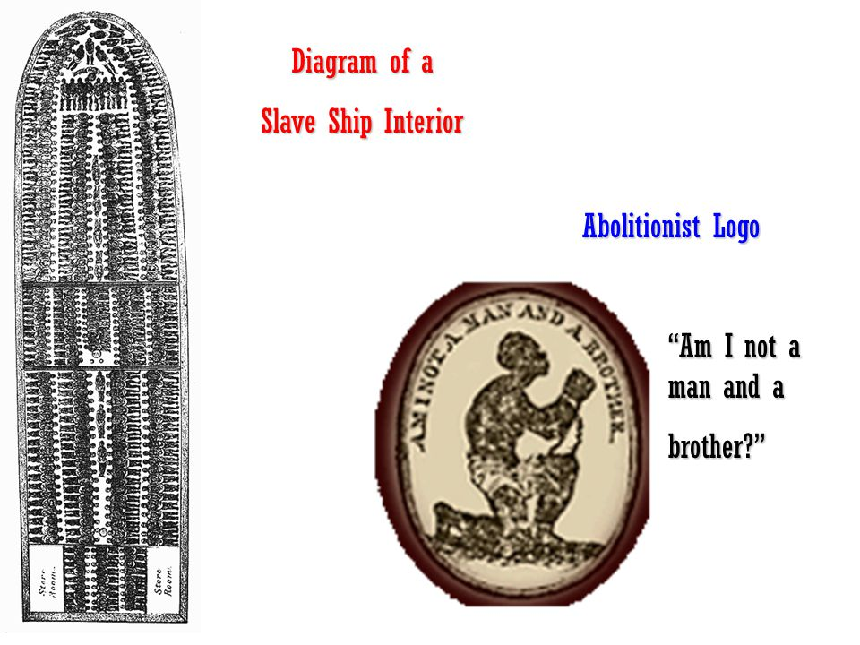 Diagram of a Slave Ship Interior Abolitionist Logo Am I not a man and a brother